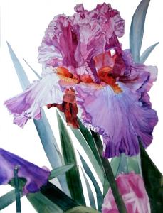 Watercolor Roses And Irises 2013